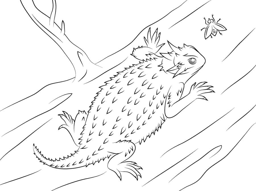 Coloring pages: Coloring pages: Horned lizard, printable
