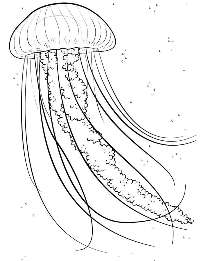 Ausmalbilder: Qualle Ausmalbilder Fische Tiere