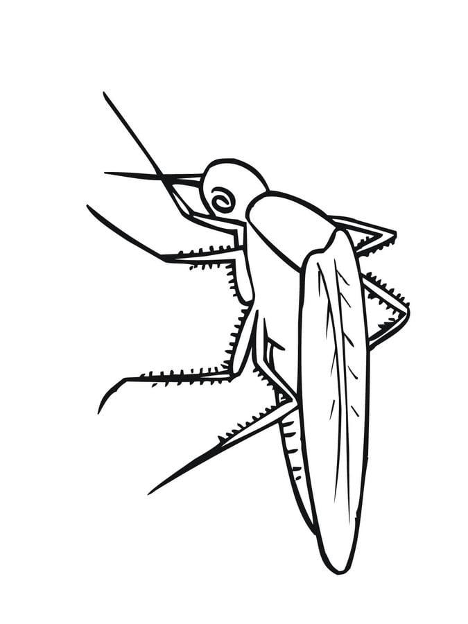 Dibujos para colorear: Mosquito imprimible, gratis, para