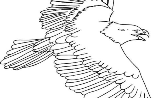 Ausmalbilder: Fischadler
