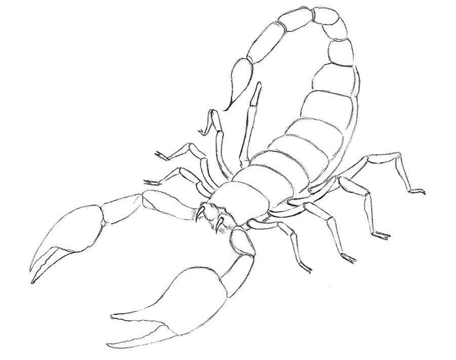 Dibujos Para Colorear Escorpiones Imprimible Gratis Para