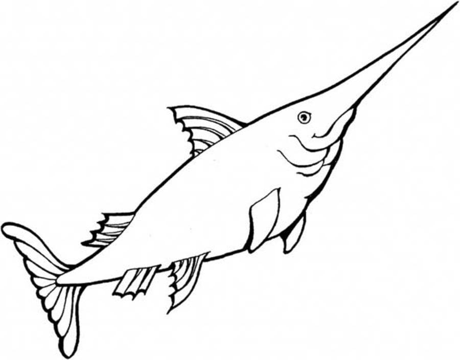 Ausmalbilder Schwertfisch Zum Ausdrucken Kostenlos Fr
