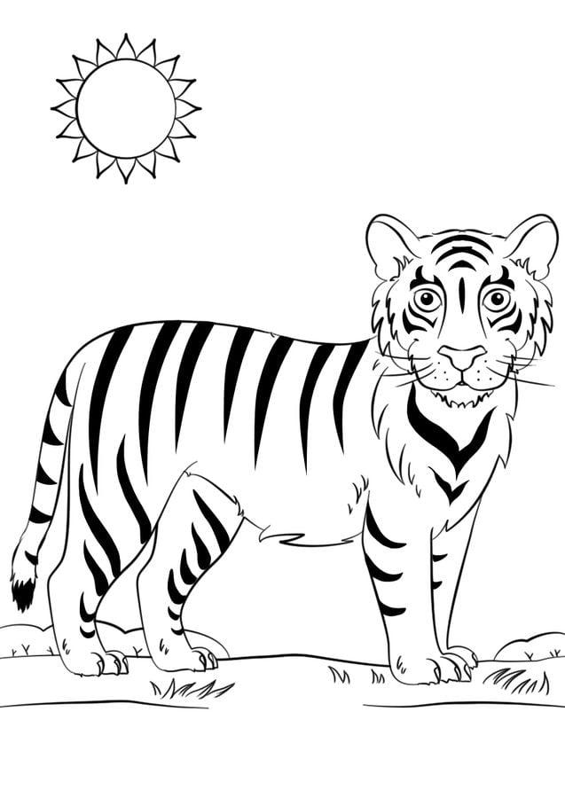 Malvorlage Tiger Einfach