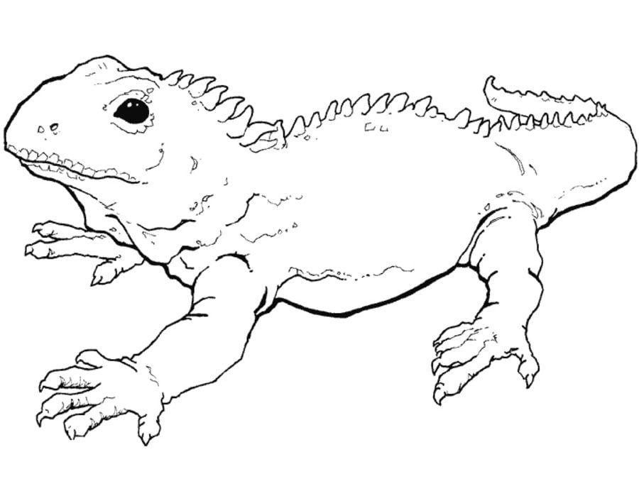 Coloring pages: Coloring pages: Tuatara, printable for