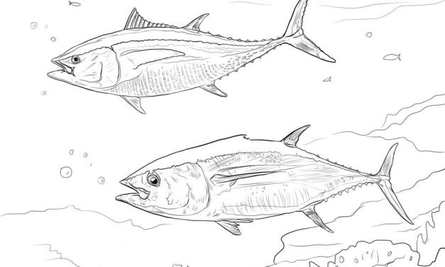 Ausmalbilder: Thunfisch