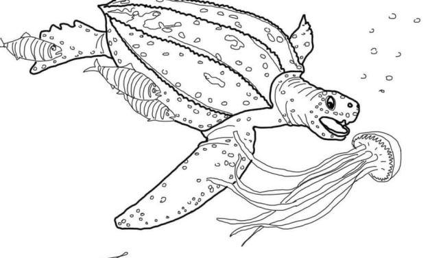 Ausmalbilder: Meeresschildkröten