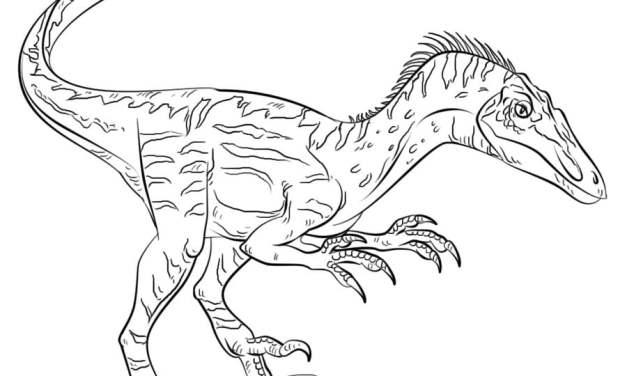 Ausmalbilder: Velociraptor