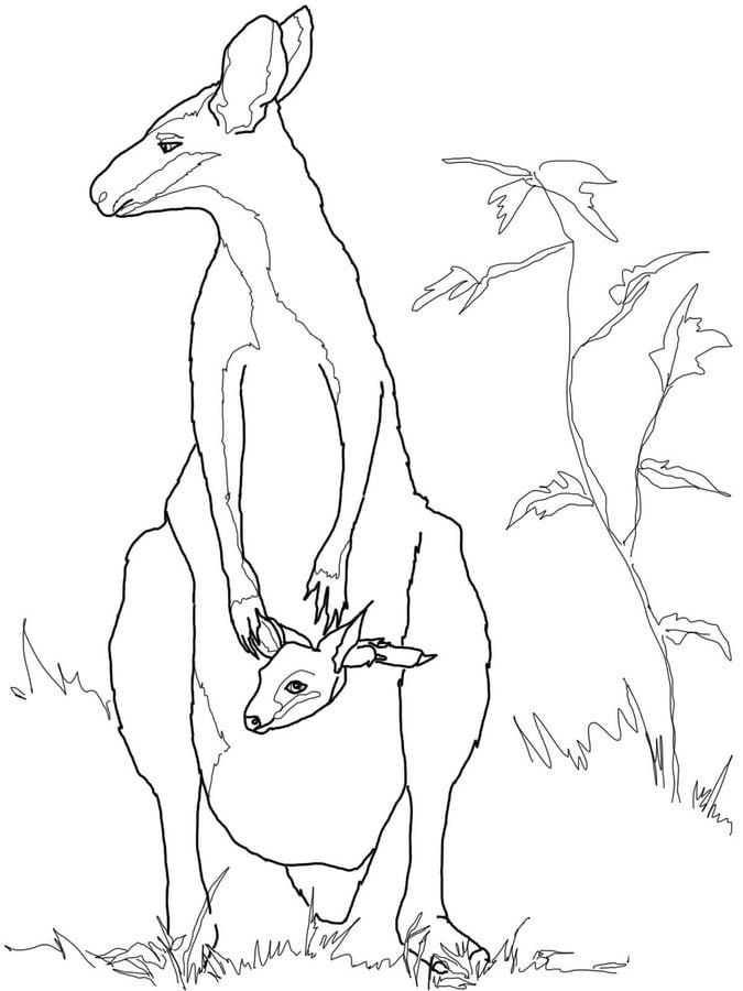 Coloring pages: Coloring pages: Wallaby, printable for