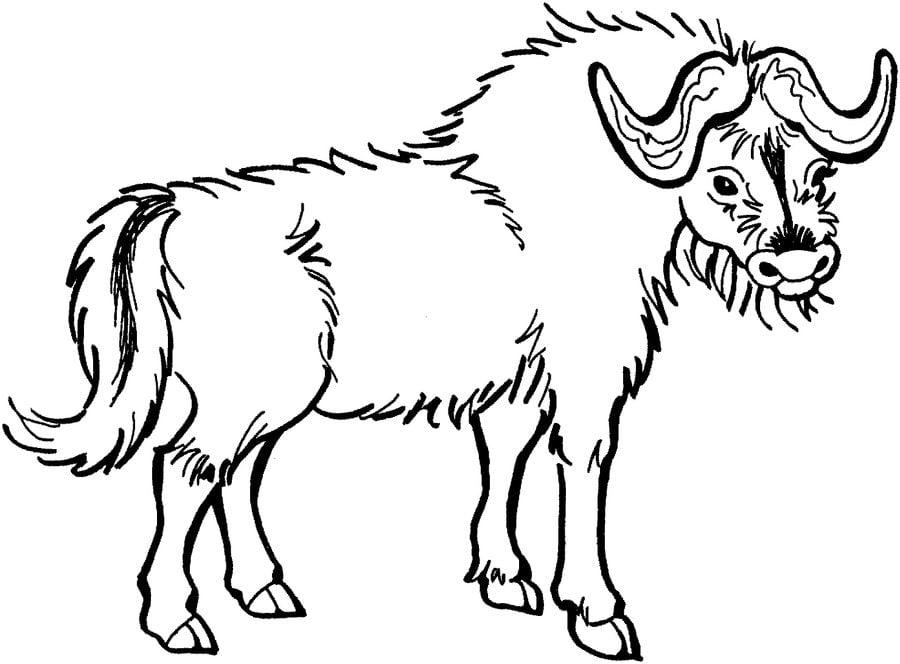 ausmalbilder ausmalbilder yak zum ausdrucken kostenlos