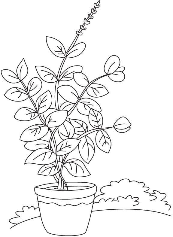 Coloriages: Basilic imprimable, gratuit, pour les enfants