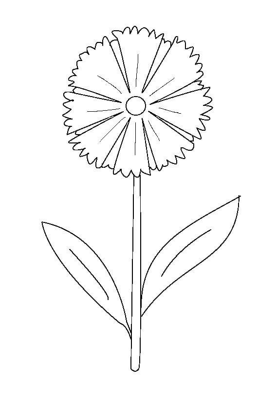 ausmalbilder ausmalbilder kornblume zum ausdrucken