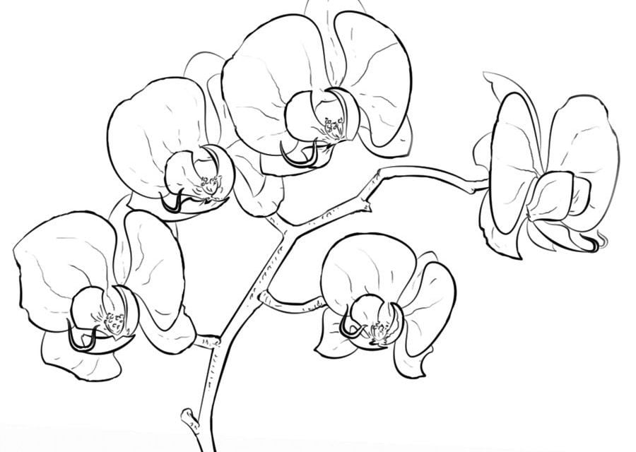 Malvorlage Orchideenblüte