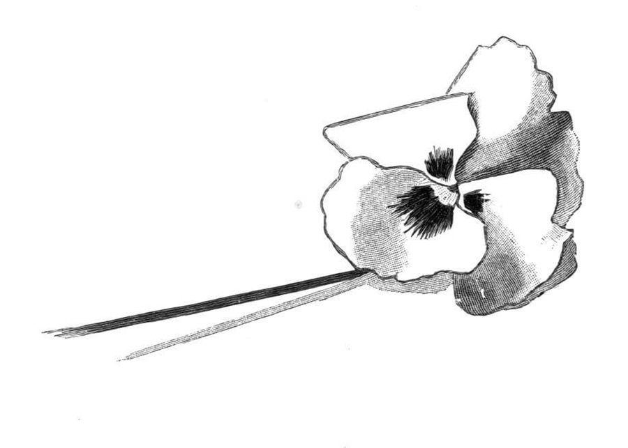 Disegni da colorare: Disegni da colorare: Viola stampabile