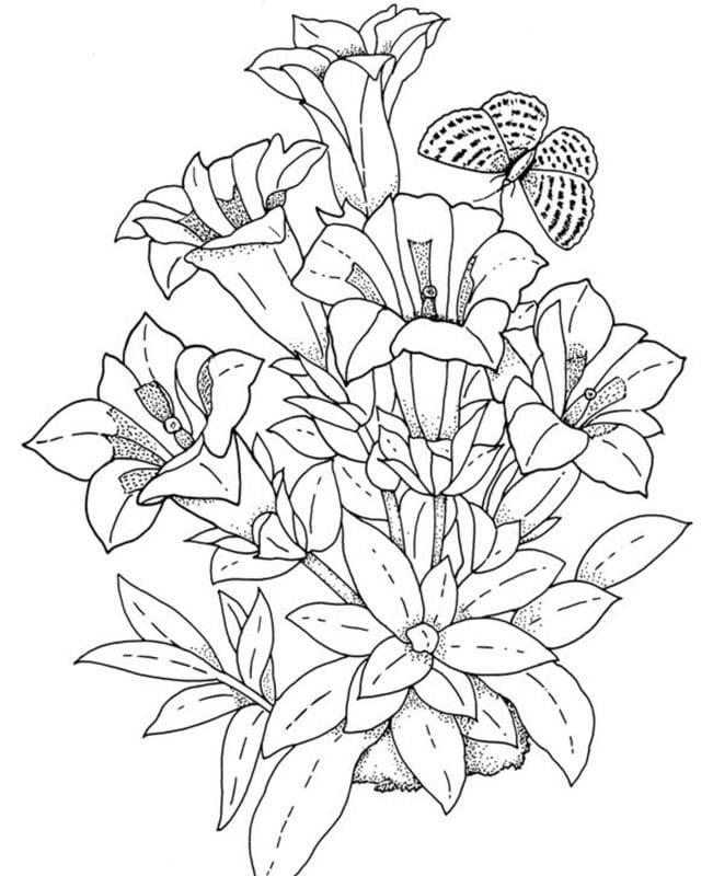 ausmalbilder für erwachsene pflanzen zum ausdrucken