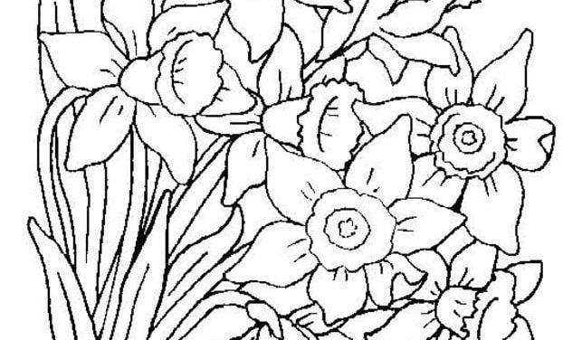 Ausmalbilder: Blumenstrauß