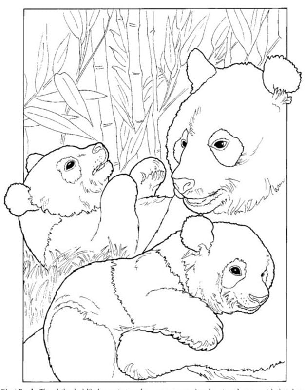 ausmalbilder für erwachsene: panda zum ausdrucken