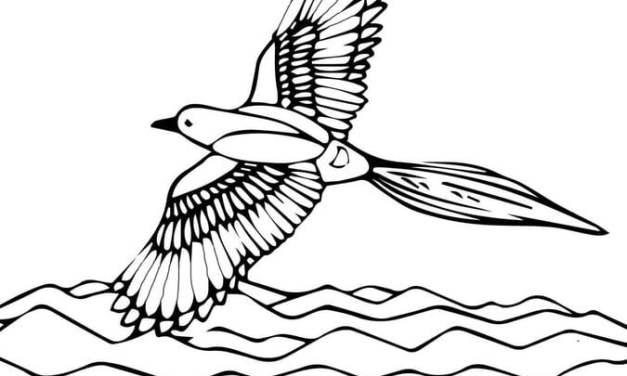 Ausmalbilder: Flötenvogel