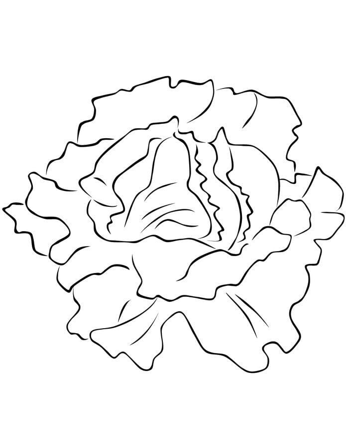 Ausmalbilder: Gartensalat Ausmalbilder Gemüse Pflanzen
