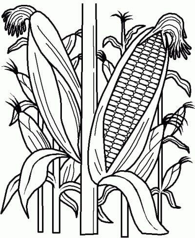 Ausmalbilder: Maize