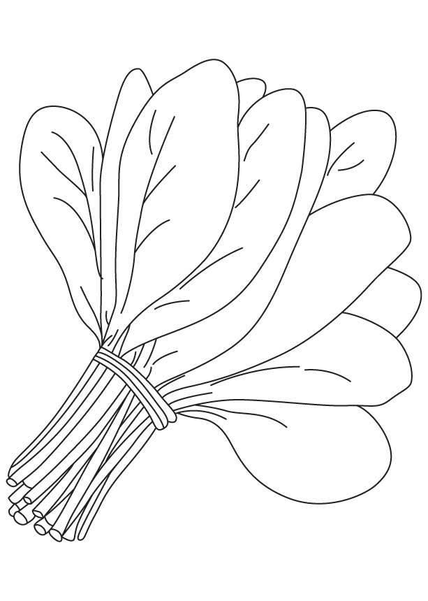 Ausmalbilder: Spinat Ausmalbilder Gemüse Pflanzen