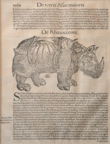 SOLD. Rhinoceros: Brought from India in 1515 to Manuel I King of Portugal, this was the first Rhinoceros seen in Europe since antiquity. After Albrecht Durer with text in Latin.