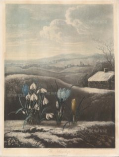 The Snowdro with yellow and purple crocuses set in a wintry English landscape.