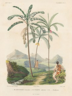 Martinezia truncata, Euterpe andicola and Euterpe Haenkeana with Guaranins hunting with bow and arrow. From d'Orbigny's eight year expedition to South America which preceded that of his rival, Charles Darwin.