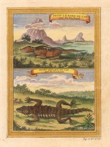 Lizard: Grand Lizard du Cap and Peitit Lizard du Cap.