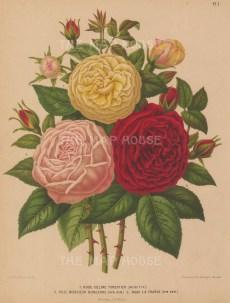 Celine Forestier, Monsieur Boncenne and La France.
