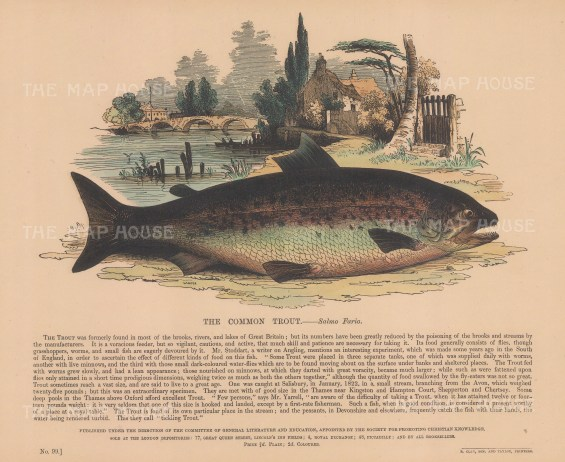 The Common Trout with descriptive text: Founded in 1698, the SPCK is the oldest Anglican mission and publishing house of the Church of England.