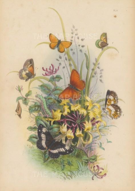 Marsh Ringlet Butterfly, underside (1-3), Small Heath Butterfly underside, caterpillar (4-5) and the White Admiral Butterfly underside, caterpillar and chrysalis. (6-9).