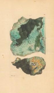 Cuprum phosphatum. Copper phosphate from Cornwall