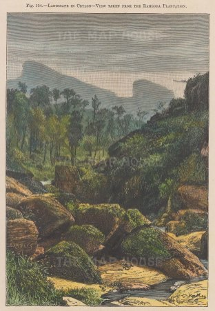View taken from Ramboda Plantation.