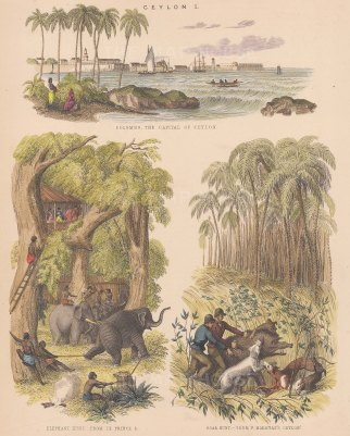 Treble view. Panorama of Colombo port, an elephant hunt from Le Prince, and a boar hunt from Capt. Frederick Marryat's.