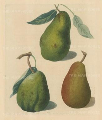 Pears: Saint Germain, Colmar and Brown Beurree.