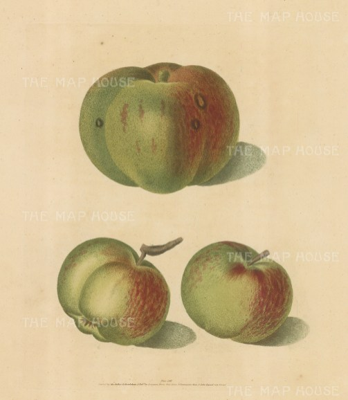 "Brookshaw: Apples. 1817. An original colour antique mixed method engraving. 8"" x 11"". [NATHISp2341]"