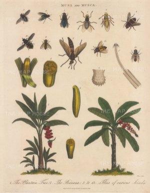 With details of fruit and ten specimens of fruit flies.