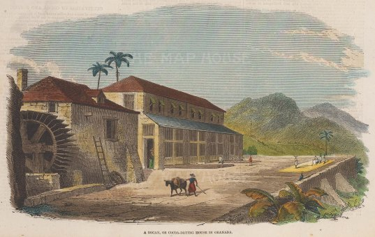 """Illustrated London News: Cocoa, Grenada. 1857. A hand coloured original antique wood engraving. 9"""" x 6"""". [WINDp1103]"""