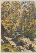 "Illustrated London News: Parque Almendares (Havana's Forest), Cuba. 1869. A hand coloured original antique wood engraving. 10"" x 14"". [WINDp993]"