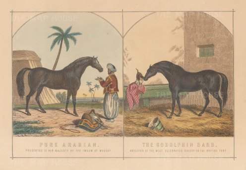 Arabian Stallion gifted to Queen Victoria by the Imam of Muscat and the Godolphn Bard.