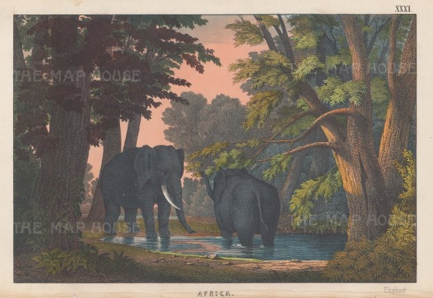 "Edmonston & Douglas: Elephants. 1860. An original antique chromolithograph. 10"" x 7"". [NATHISp7997]"