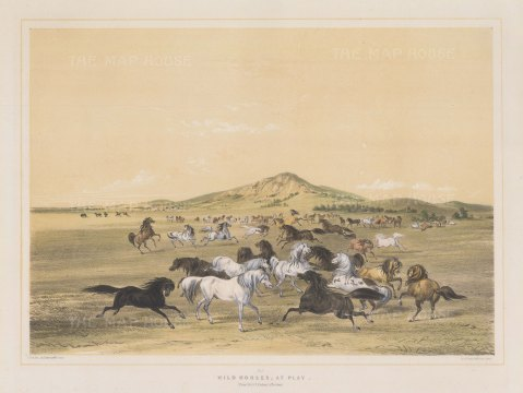 Wild Horses at Play: From one of the most important works on Native American culture.