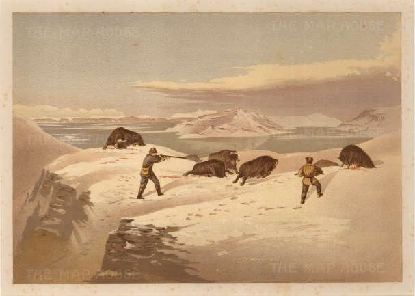 Shooting Muskox: From the Expedition of H.M.S.Alert 1875/77: