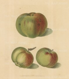Apples: Three Green and Red Varieties: