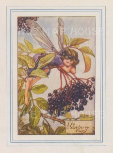 "Barker: Elderberry Fairy. 1927. An original vintage chromolithograph. 3"" x 4"". [DECp2176]"