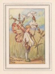 "Barker: White Campion Fairy. c1925. An original vintage chromolithograph. 3"" x 4"". [DECp1481]"