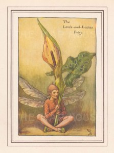 """Barker: Lords and Ladies Fairy. c1923. An original vintage chromolithograph. 3"""" x 4"""". [DECp1660]"""