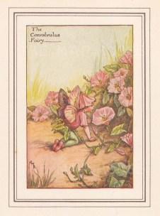 "Barker: Convolvulus Fairy. c1925. An original vintage chromolithograph. 3"" x 4"". [DECp1758]"