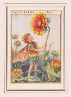 "Barker: Gaillardia Fairy. c1944. An original vintage chromolithograph. 3"" x 4"". [DECp1865]"