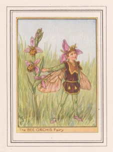 """Barker: Bee Orchis Fairy. c1948. An original vintage chromolithograph. 3"""" x 4"""". [DECp1901]"""